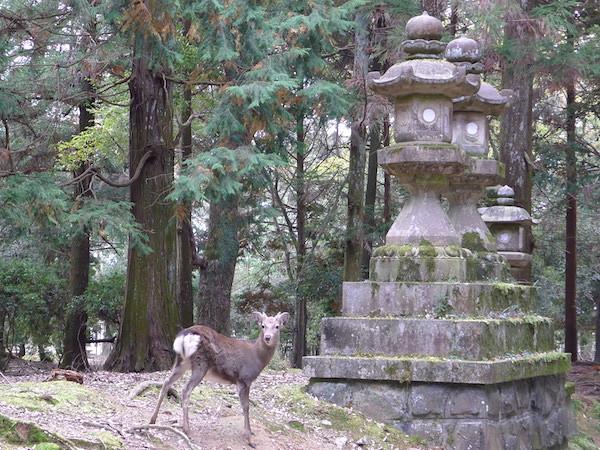 330-Nara