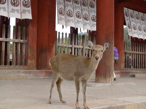 308-Nara