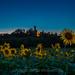 2017-07-05-castello notte girasoli -1DM4B0789