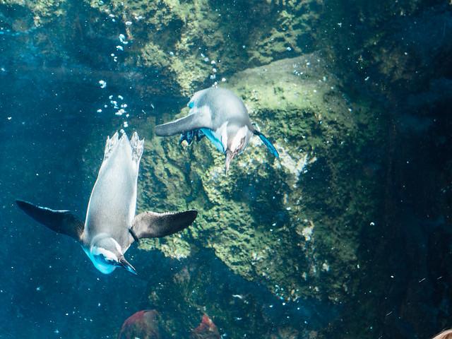 20170718_kyoto_aquarium-7