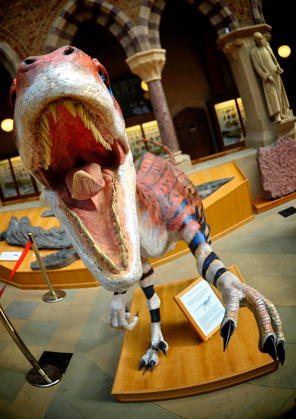 Velociraptor at Oxford's Natural History Museum. Credit IntoTh3Rainbow
