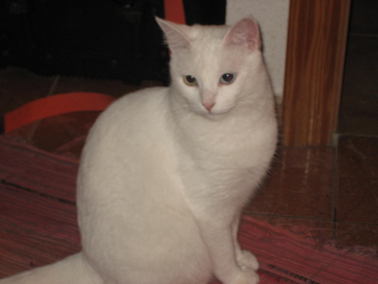 Copita, una gatita con suerte. Sería lindo si todos los gatos y perros tuvieran una familia que los quiera mucho.