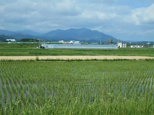 jp-Aoshima-Nobeoka (2)