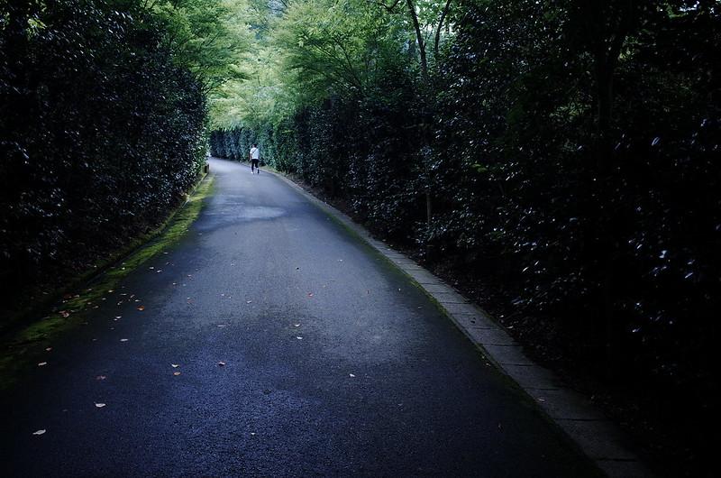 坂道の生垣