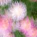 17-07-27  Daisy Dance