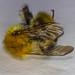 A Bee Nomore