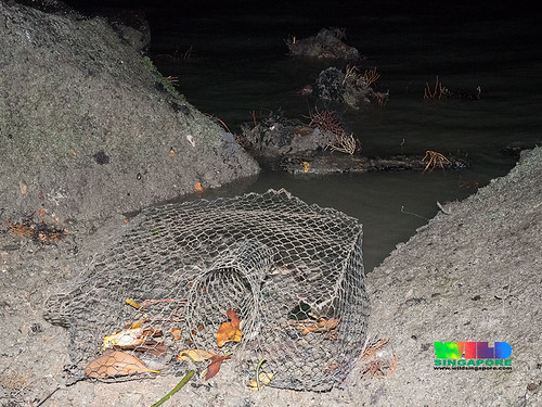 Fish trap off rich reefy rocky shore on Pulau Ubin