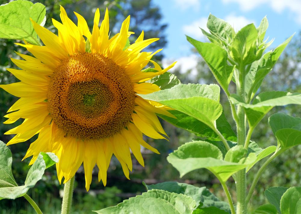 Солнечное лето_LJ