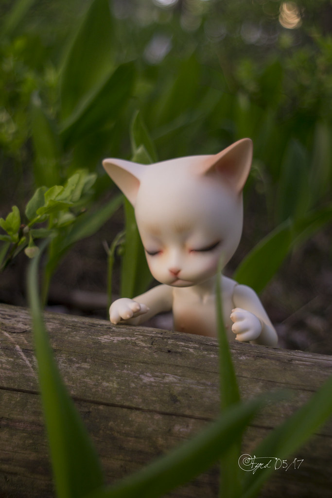 170526 Kitty 02