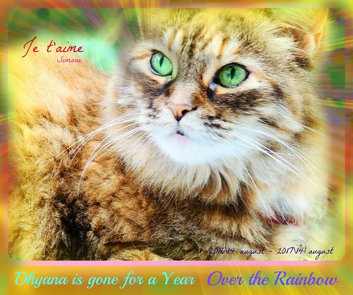 Dhyana est au paradis un an