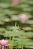 Photo:20170702 Higashi-mikawa hometown park 6 By BONGURI