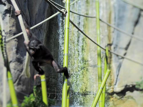 Primates - lensbaby