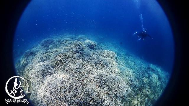 サンゴキレイゾーン