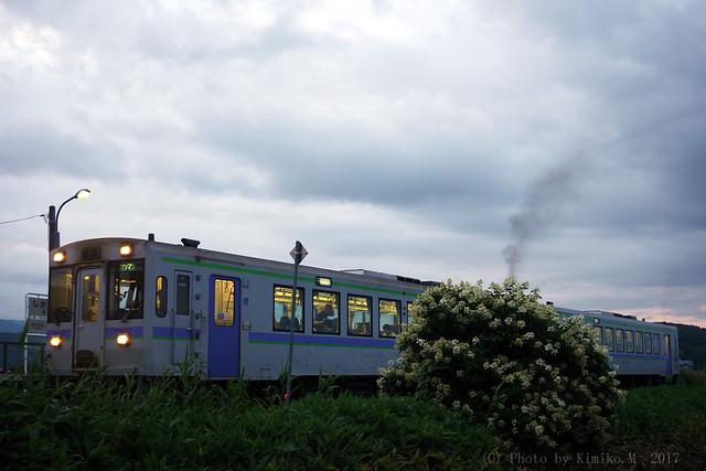 ノリウツギの花咲く駅
