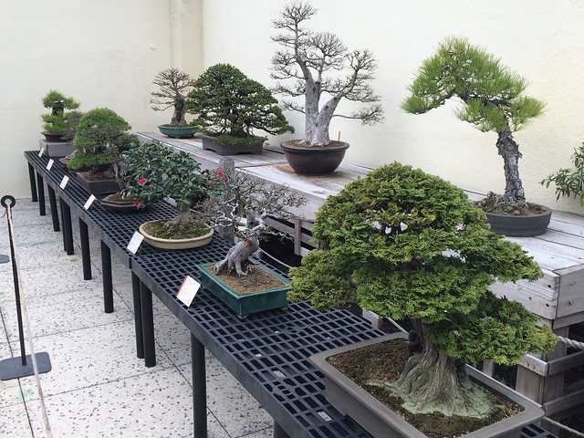 Deciphering Dc National Bonsai Penjing Museum U S National Arboretum A Dc Journey
