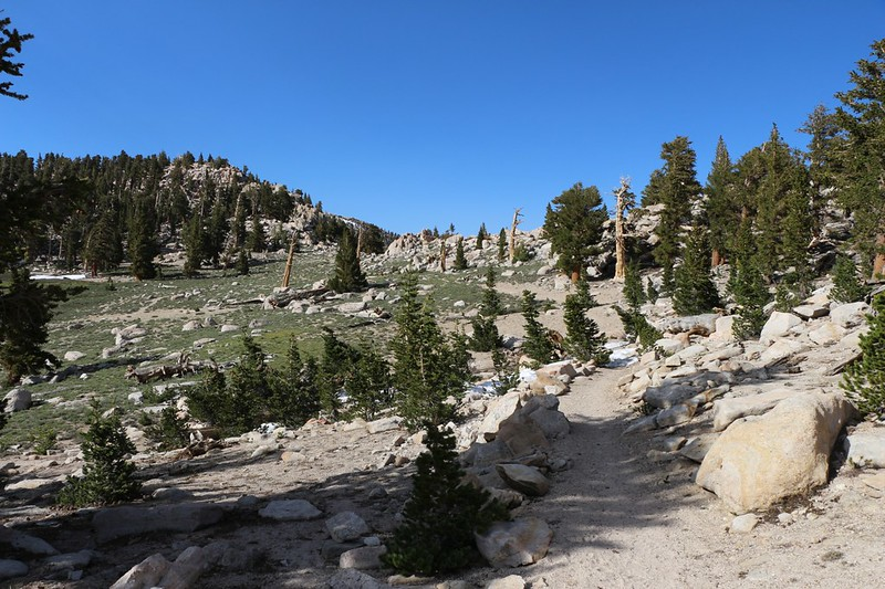 Cottonwood Pass is just ahead on the Pacific Crest Trail