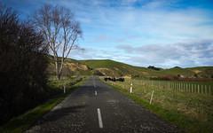 whanganui-26