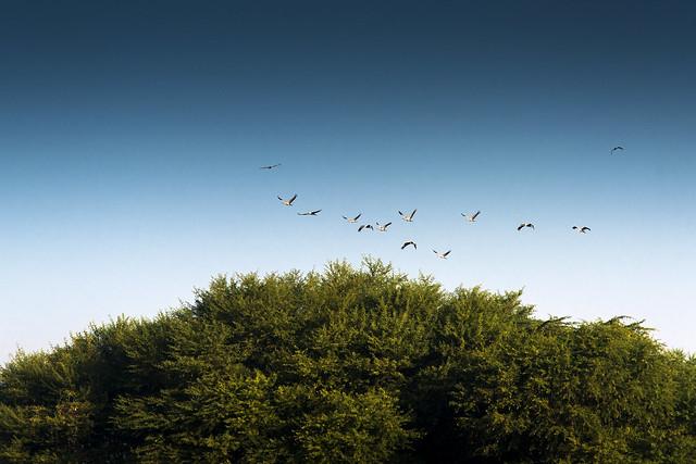 Thol Bird Sanctuary