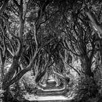 Dark Hedges Noord Ierland