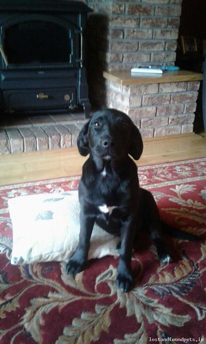 Wed, Jul 26th, 2017 Lost Female Dog - Unnamed Road, Galway, Antrim