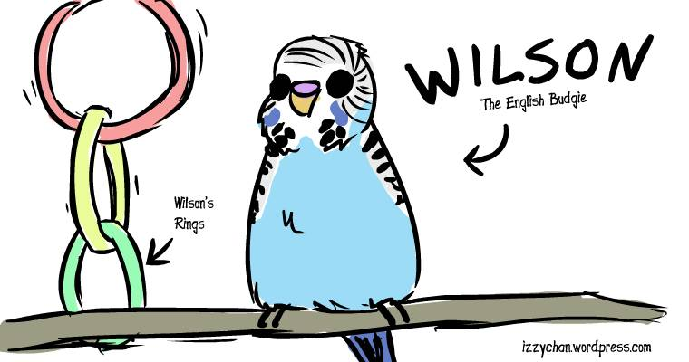 wilson the english budgie blue