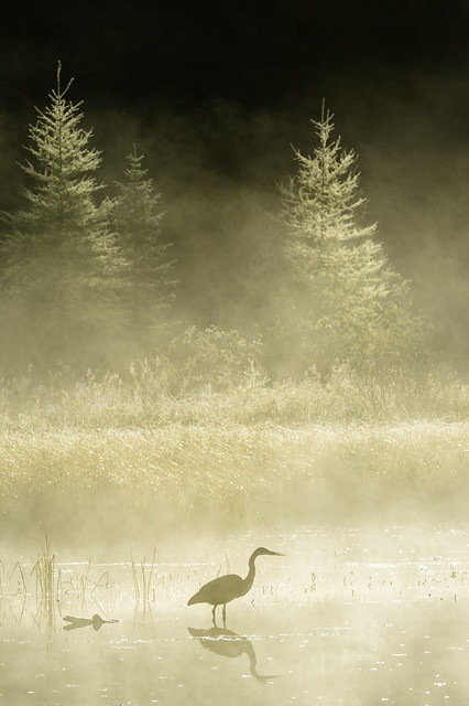 Heron in the mist, Nikon D3S, AF-S VR Nikkor 400mm f/2.8G ED