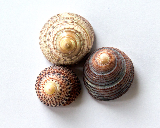 Three of my treasures (Shells 32)