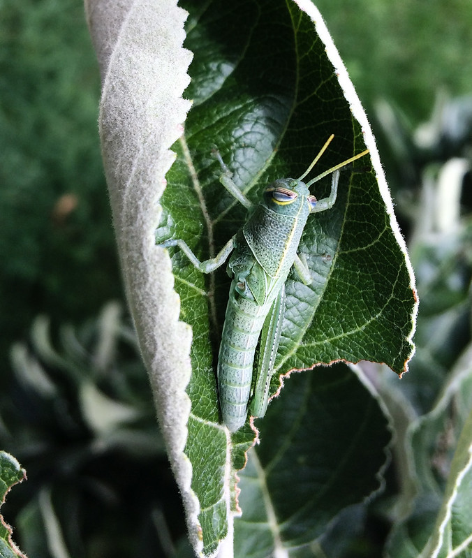 grasshopper_20170728_103