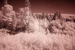 flickrbig-3816
