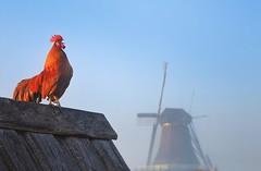 Good morning! ? #zaandam