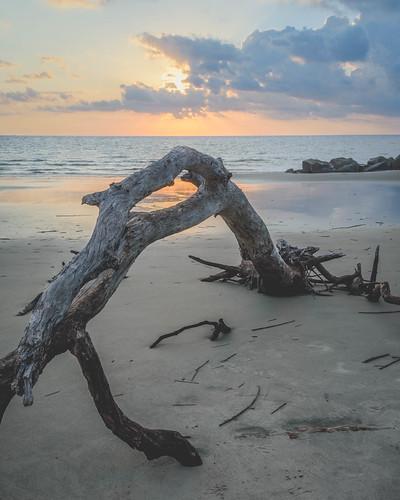 beach nikon sunrise southcarolina ocean water atlanticocean nikon1755mm morrisisland nikon7200 driftwood follybeach rocks