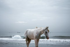 A white horse standing lonely at beach in the morning