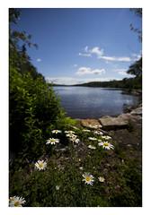 Wild flowers, Lake Awosting, Minnewaska State Park Preserve, New Paltz, New York