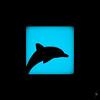 Shadow (381/100) - Dolphin