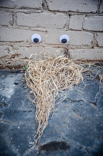 Googly-Eye Bombing Downtown Greenville-33