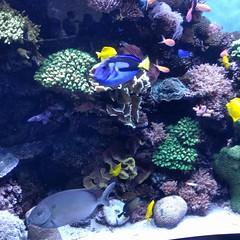 Day trip to Monterey Bay Aquarium