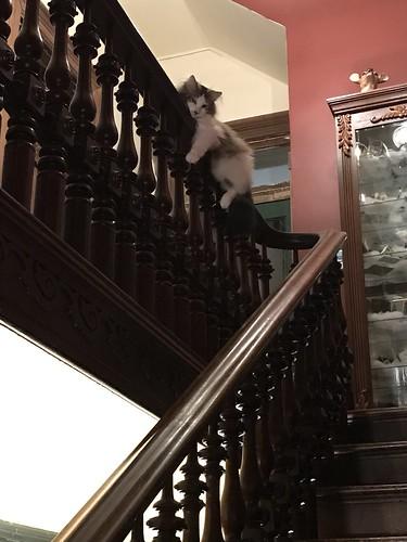 Clark the monorail cat
