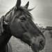 Rosemary's Horse.jpg