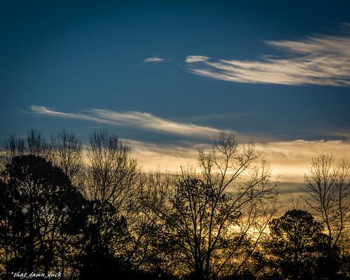 nature trees sunrise clouds dawn
