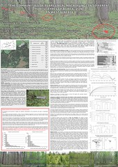 "ShapDiv project poster prepared for a conference ""Species concepts in fungi: new look for old problems"""