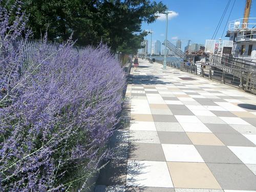 Pier 25 Lavender