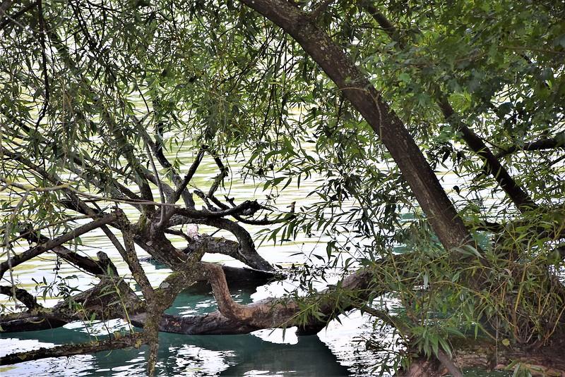River Aar 20.07 (9)