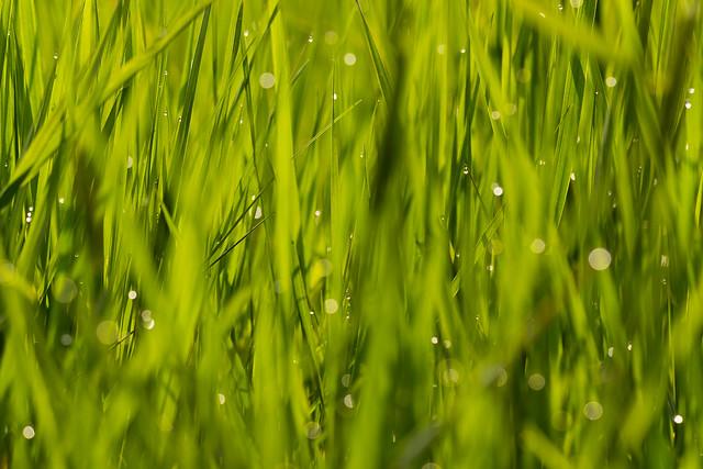 Einfach mal im Gras, Canon EOS 550D, Sigma 180mm f/2.8 EX DG OS HSM APO Macro