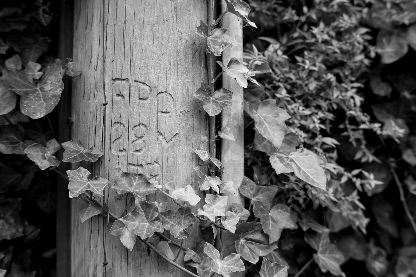Leica MM & 7Artisans 50mm 1.1