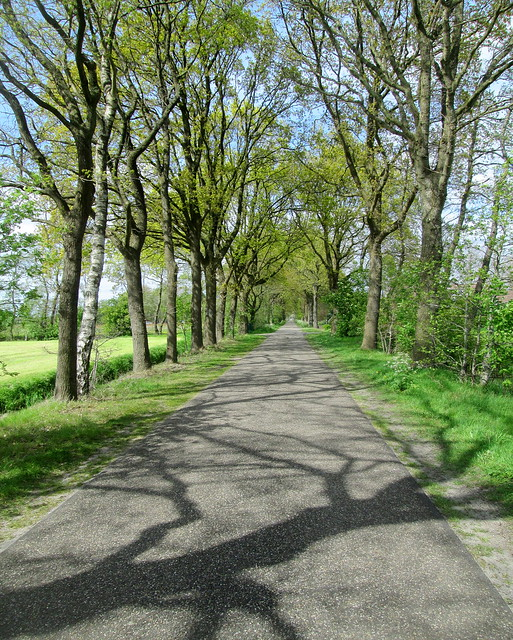 Dutch road