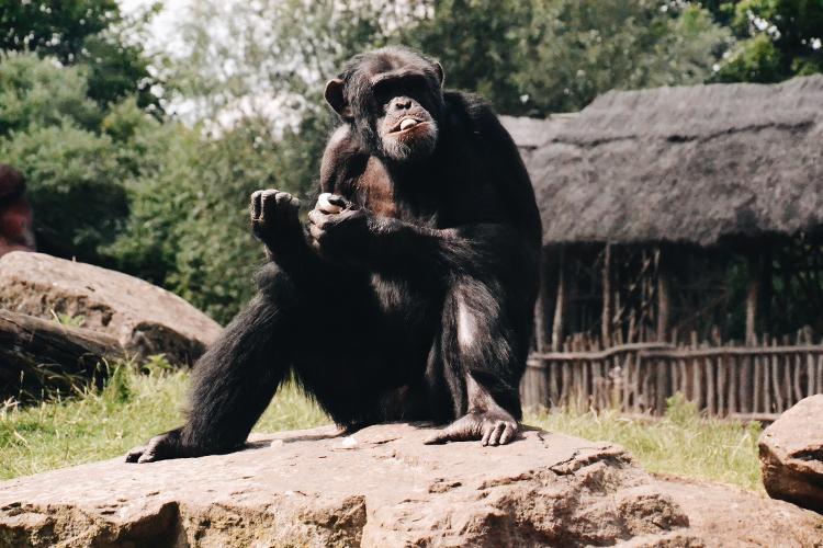 Im Zoo (10)
