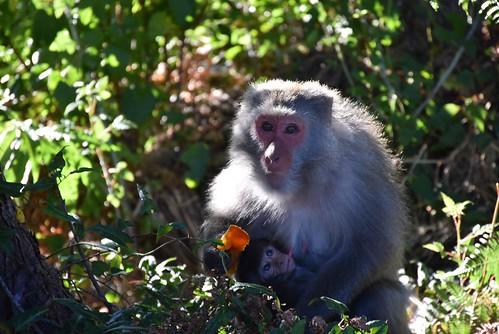武陵露營區-猴群