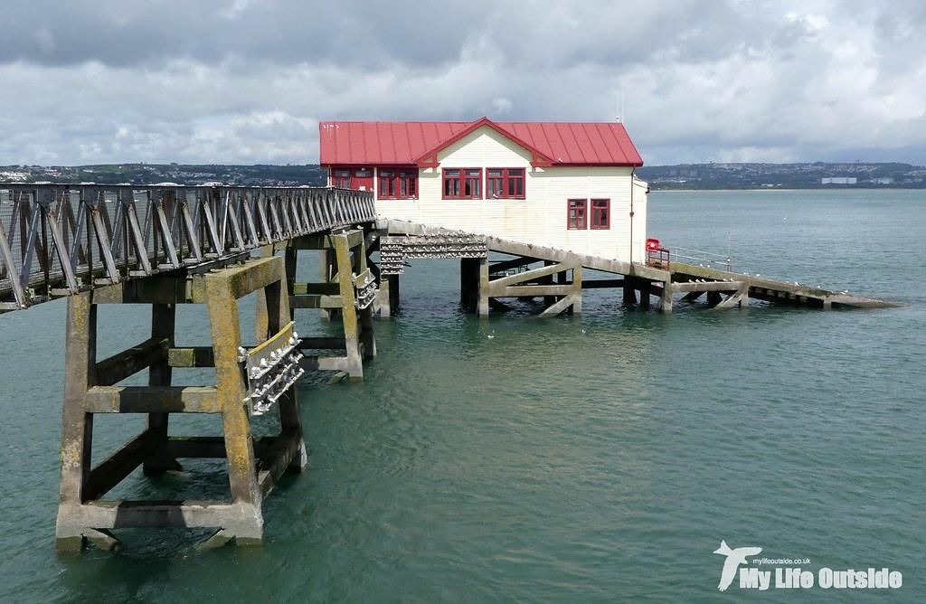 P1100648 - Kittiwake, Mumbles Pier