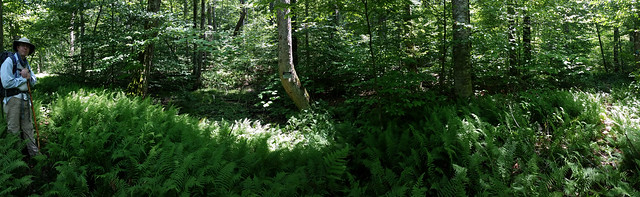 20170715_Cranberry_Wilderness_005