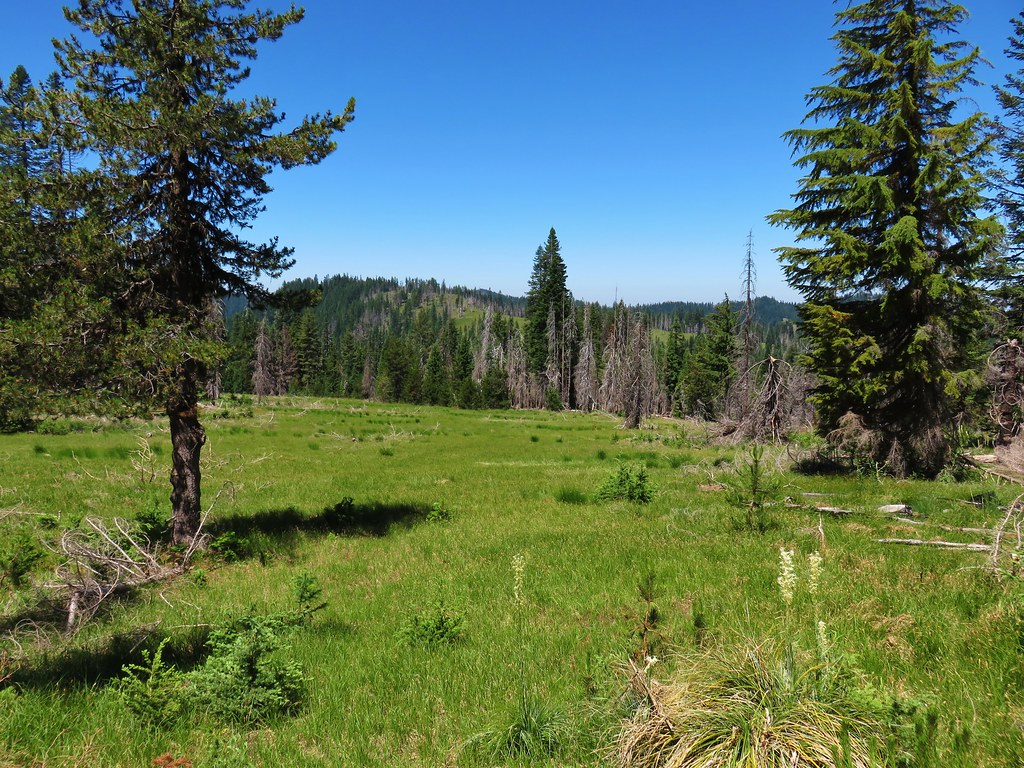 The Grasshopper Trail was not visible through this meadow, a few Forest Service flags helped mark the way.